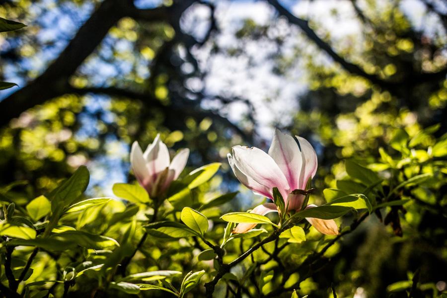 arboretum_2